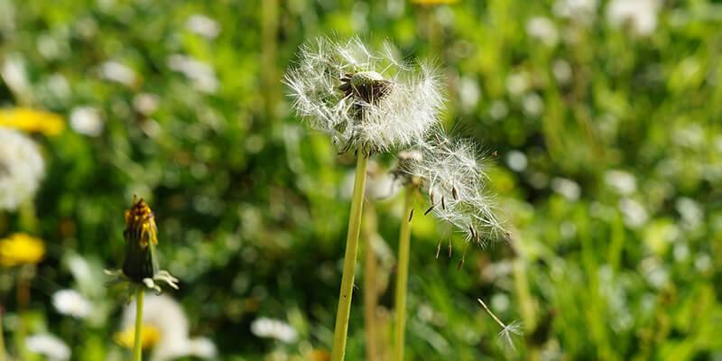 Alergije - vjezbe na otvorenom