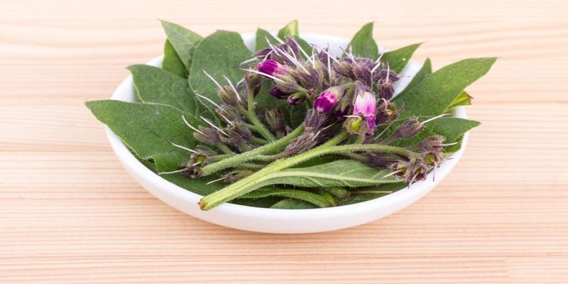 Gavez: Čudesna biljka iz rajskog vrta u službi zdravlja i ljepote